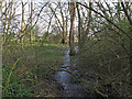TQ6779 : Wet section of Linford Wood by Roger Jones