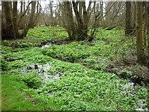 SU9948 : Wetland in flower by Carroll Pierce