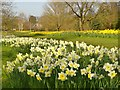 TQ0658 : Blooming Wisley by Colin Smith