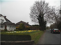 TQ2057 : Houses on Headley Road, Langley Bottom by David Howard