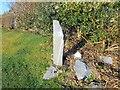 NM8531 : Memorial Garden by David Dixon