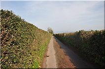 SS9907 : Mid Devon : Knowle Lane by Lewis Clarke