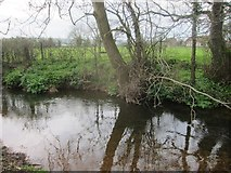 ST5756 : The River Chew upstream from Shrowl Bridge by Dr Duncan Pepper