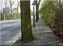 SK5907 : Pavement and trees along Loughborough Road by Mat Fascione
