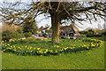 SO9236 : Daffodils in Bredon churchyard by Philip Halling