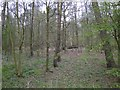 TF8608 : Fallen trees in Whin Allotment Plantation by Adrian S Pye