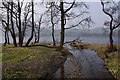 NY4623 : Elder Beck enters Ullswater by Ian Taylor