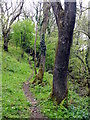 SX1798 : Footpath Through Tamp's Wood by Tony Atkin