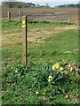 TM3045 : Footpath Marker And Daffodils by Keith Evans