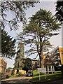 ST5575 : Woodside, Sneyd Park by Derek Harper
