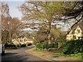 ST5575 : Old Sneed Park, Sneyd Park by Derek Harper