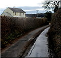 ST4491 : High hedges and a muddy road south of Llanvair Discoed by Jaggery