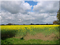 TM1490 : Oilseed rape crop by Hill Farm by Evelyn Simak