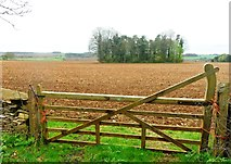 SO9700 : Copse beyond a gate - South of Coates by Anthony Parkes