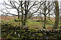 NX3871 : Dry Stane Dyke, Wood of Cree by Billy McCrorie