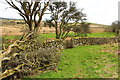 NX3869 : Dry Stane Dyke with Gate near Mill Hill by Billy McCrorie