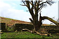 NX3869 : Dry Stane Dyke with Gate at Mill Hill by Billy McCrorie