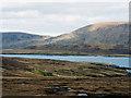HU3529 : Sheep grazing where grass is a luxury by Julian Paren