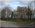 SD4678 : Fallen black poplar, Arnside by Karl and Ali