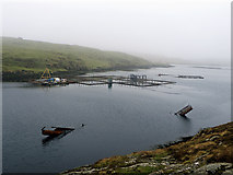 HU6872 : A salmon farm in West Voe, Housay by Julian Paren