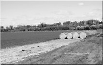 TM3995 : Straw bales in field by Brundish Farm by Evelyn Simak