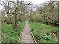 SE9887 : Riverside boardwalk by Pauline E