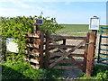 NT9342 : Access to Duddo Stone Circle by David Clark