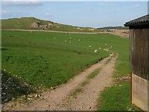 SD7459 : Halsteads farm track towards Fair Hill by Steve Houldsworth