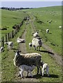 NX0454 : Lambing at Cowend by Andy Farrington