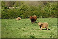 SZ5885 : Highland Cattle, Alverstone, Isle of Wight by Peter Trimming