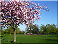 TQ4375 : Cherry blossom and playground, Eltham Park South by Marathon