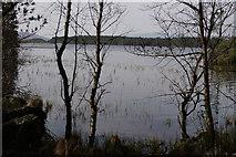 NH9718 : Loch Garten by Peter Trimming