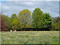 TQ0451 : The meadow, Clandon Park by Alan Hunt
