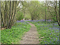 TM2031 : Tree lined path in Copperas Wood by Roger Jones