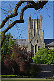 ST5545 : Wells Cathedral by Stephen McKay