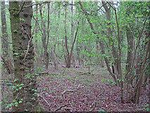 TL5741 : Shadwell Wood by Roger Jones