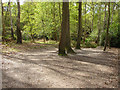 SU9770 : Woodland, Windsor Great Park by Alan Hunt