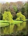 SE2868 : Willows by the Skell by Derek Harper