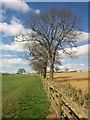 SE2766 : Trees along field boundary near Foal Cote by Derek Harper