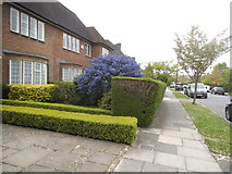TQ2688 : Houses and garden on Kingsley Way by David Howard