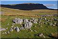 SD8274 : Limestone boulders, Tarn Bar by Ian Taylor