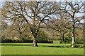 SY0197 : East Devon : Grassy Field by Lewis Clarke