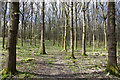 SO6415 : Birch Wood, Forest of Dean by Stuart Wilding