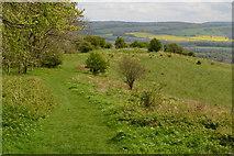 SU6022 : View near the summit of Beacon Hill by David Martin