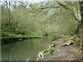 SK1273 : River Wye between Miller's Dale and Chee Dale by Andrew Hill