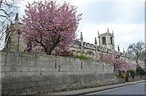 SE5952 : St Olave's church, York by Julian P Guffogg