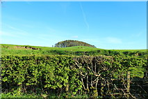 NX7865 : Farmland at Dunjarg Hill by Billy McCrorie