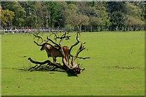 SE6301 : Yorkshire Wildlife Park: African Plains by Graham Hogg