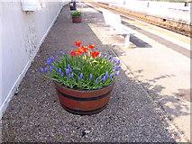 NO8686 : Flower tub on Stonehaven station platform by Stanley Howe