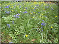 TQ1873 : Bluebells and buttercups by Pembroke Lodge by David Howard